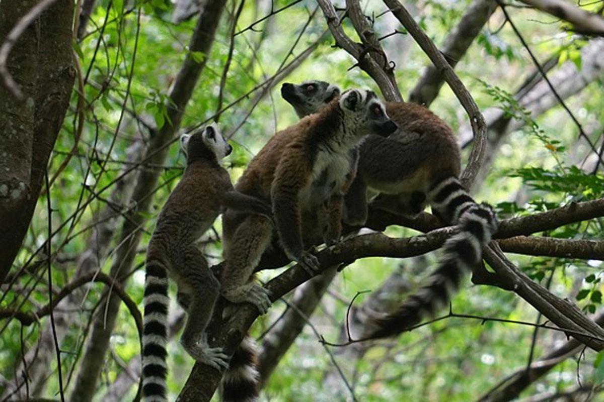 Enjoy Madagascar's nature and wildlife